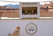 plv vins champagnes spiritueux plv qualitative merchandising efficace